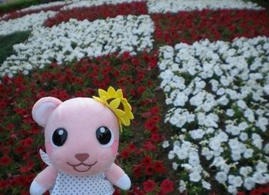 お花がきれい.JPG