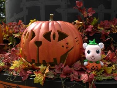 ねこ目かぼちゃ健在です.JPG