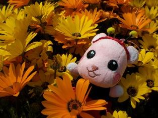 花の妖精.jpg